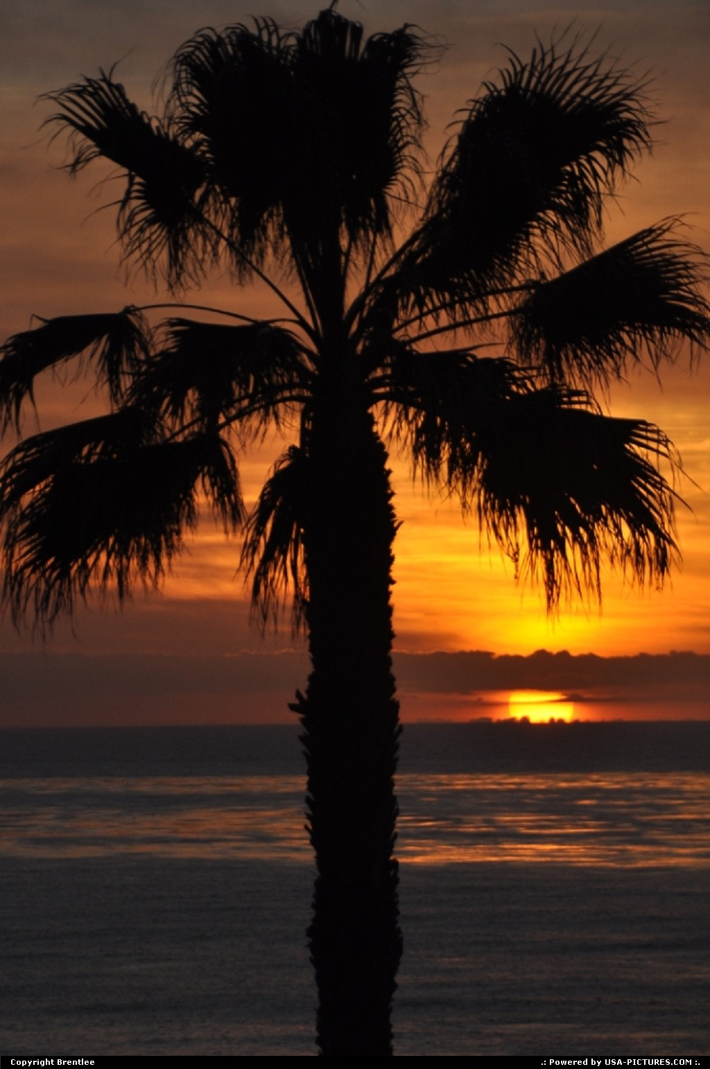 Picture by Brentlee:La JollaCaliforniasunsets