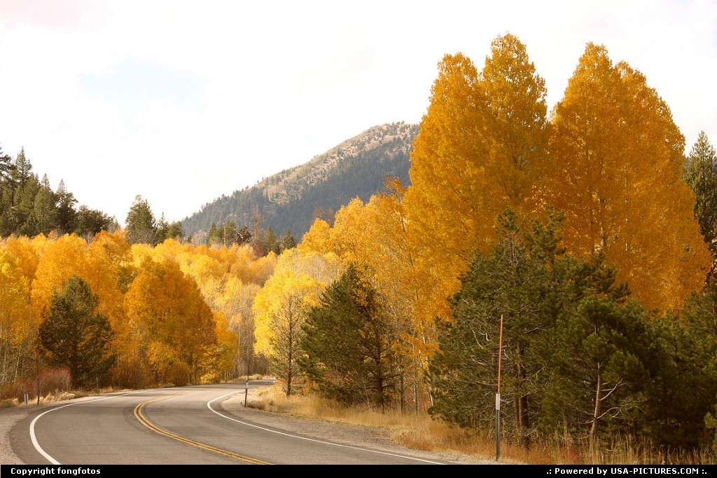 Picture by fongfotos: Lake Tahoe California   Fall Colors, California, Trees, Nature