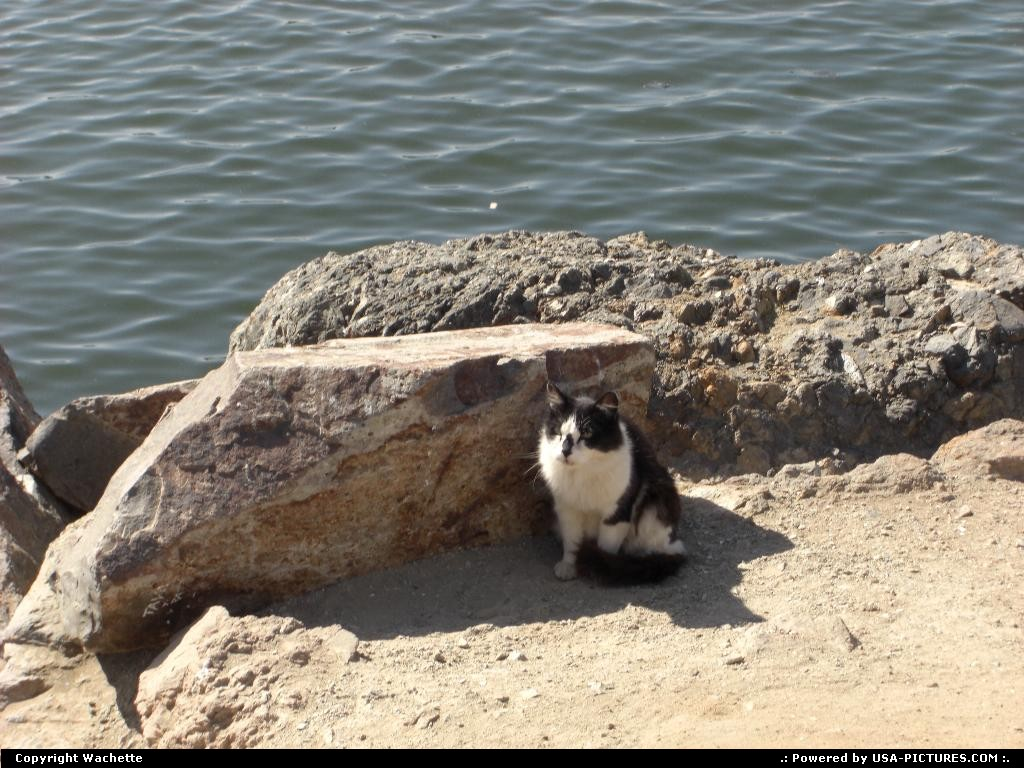 Picture by Wachette: Long Beach California   cat, pet