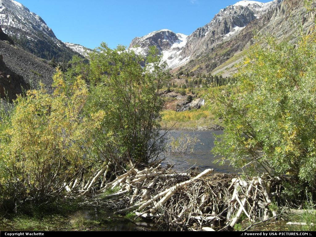 Picture by Wachette: Mammoth Mountain California   beaver