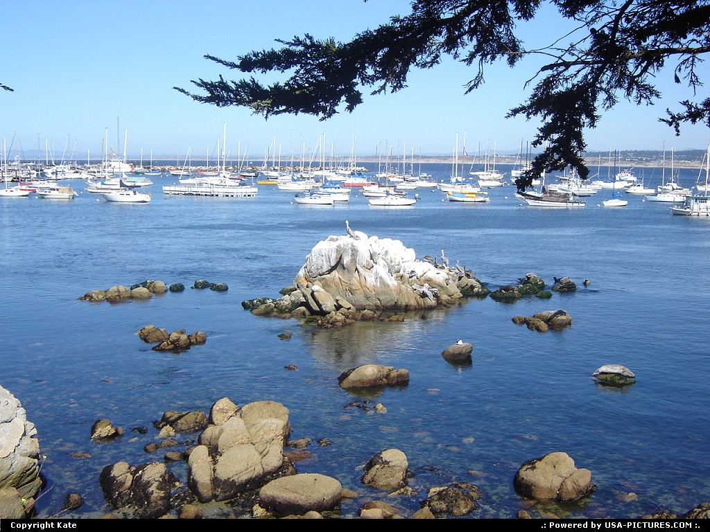 Picture by Kate:MontereyCalifornia