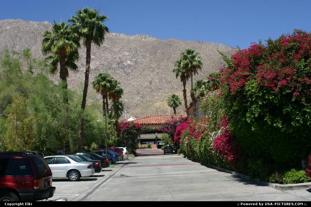 Picture by elki: Palm Springs California   palms