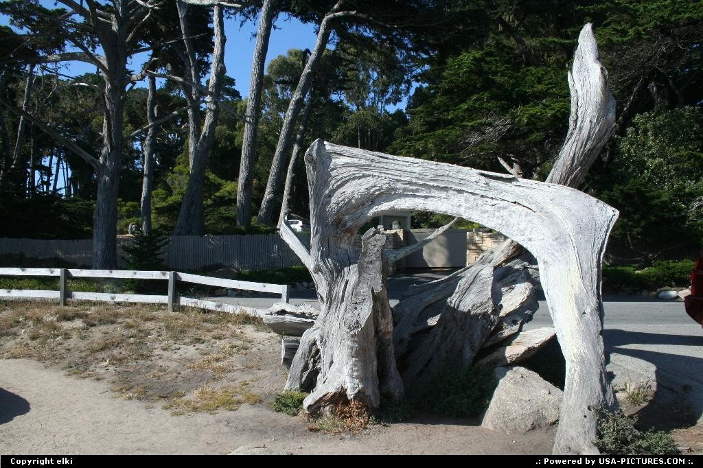 Picture by elki: Pebble Beach California   ghost tree 17 mile drive