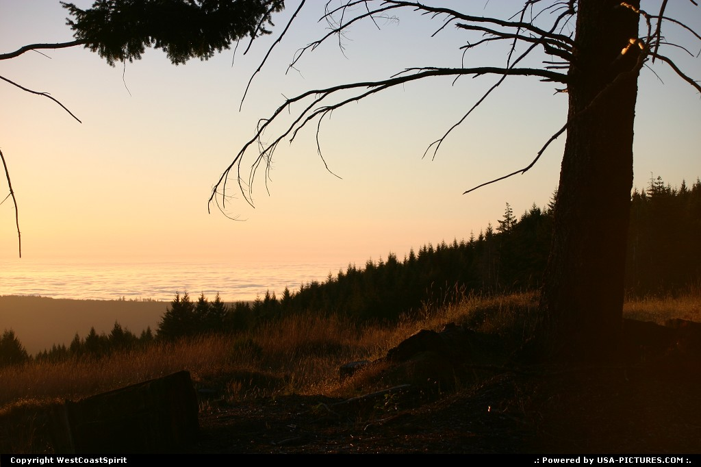Picture by WestCoastSpirit:  California Redwood  sunset, forest
