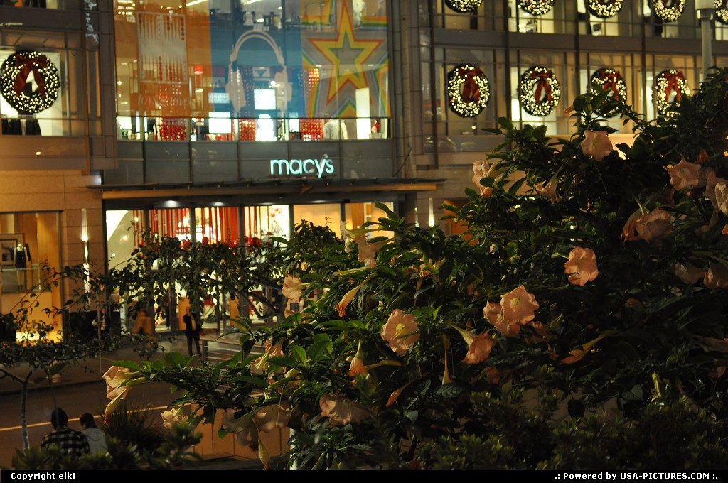 Picture by elki:San FranciscoCaliforniaunion square, macys, san francisco