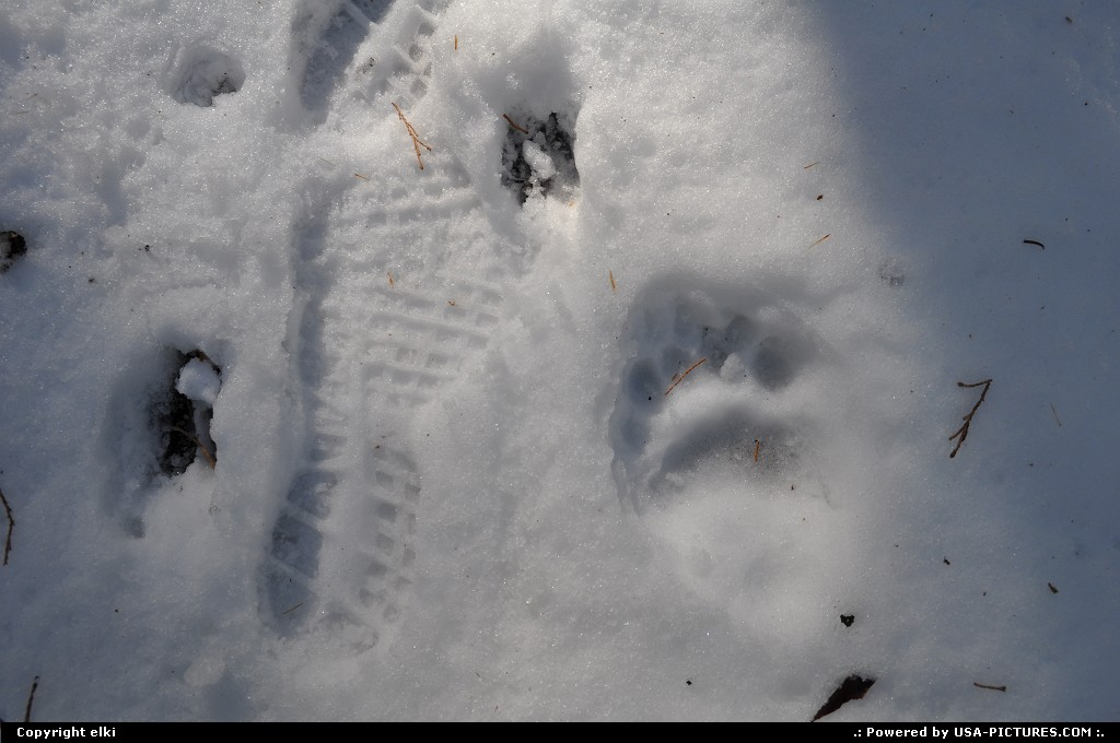 Picture by elki:CaliforniaSequoiasequoia park bear footprint