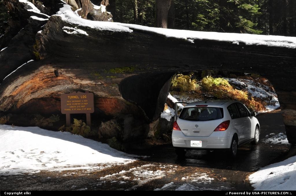 Picture by elki:  California Sequoia  sequoia national park, tunel log