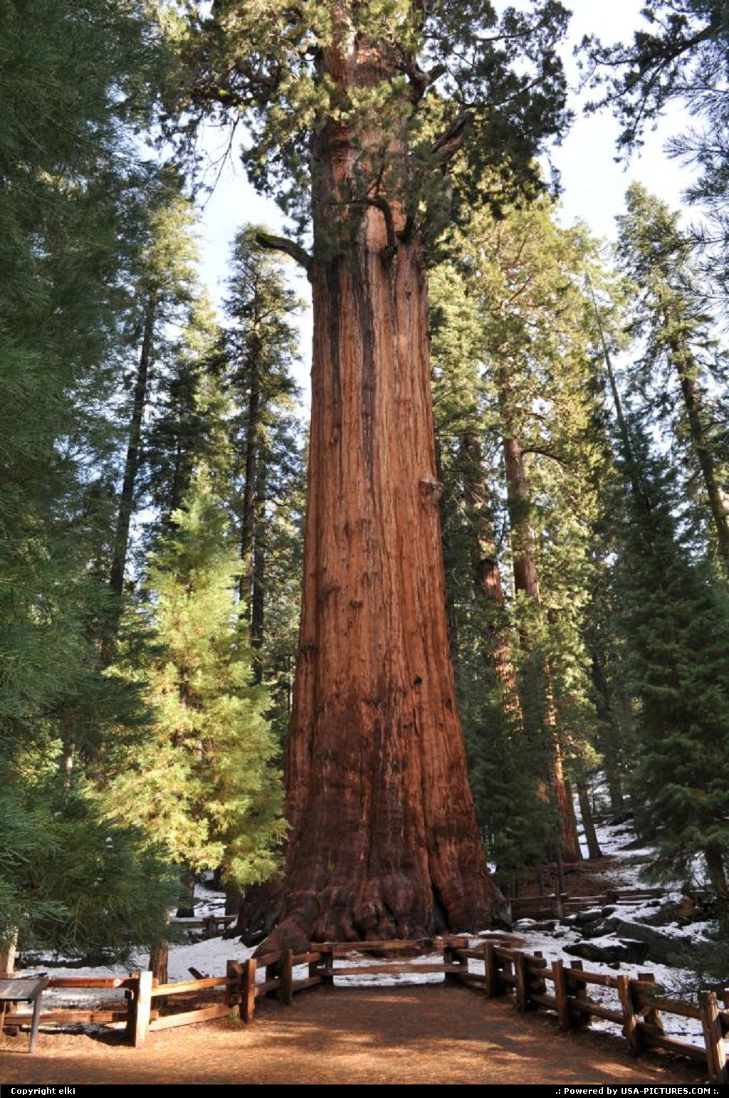 Picture by elki:  California Sequoia  sequoia