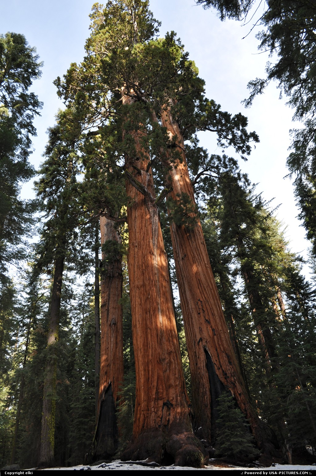 Picture by elki:  California Sequoia  sequoia national park
