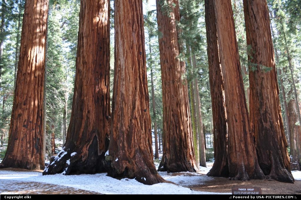 Picture by elki:  California Sequoia  sequoia national park, parker group