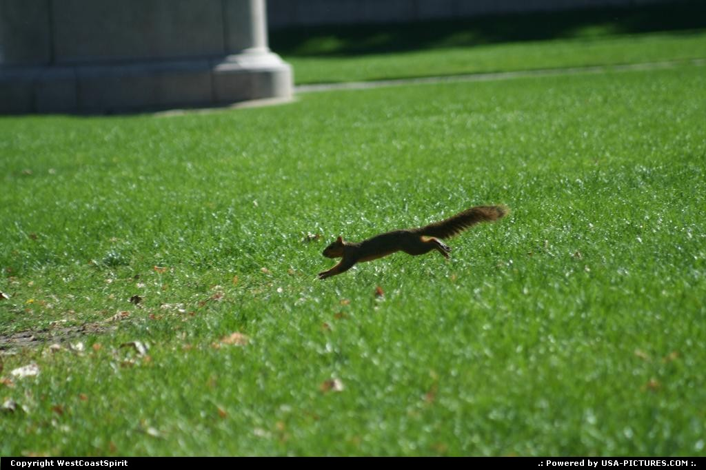 Picture by WestCoastSpirit: Denver Colorado   squirrel, mall, civic center, denver, urban