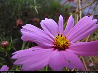 Photo by jessie824 | Washington  flower, garden, nature, pink