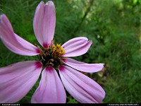 Photo by jessie824 | Washington  flower, washington, DC, nature, pink