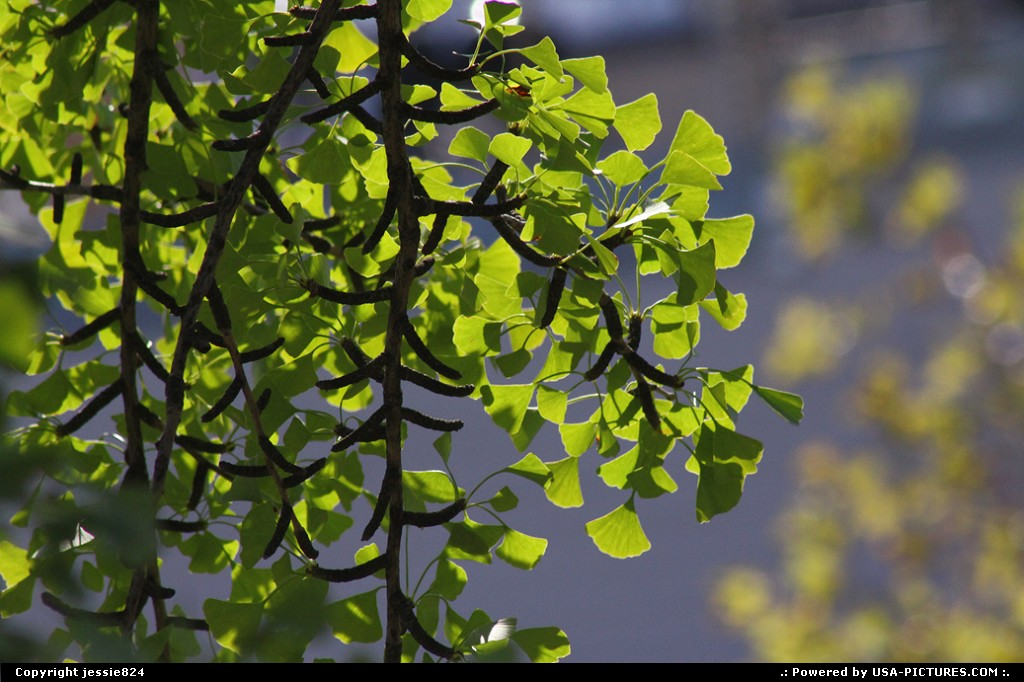 Picture by jessie824: Washington Dct-columbia   leaves, branches, green, dc