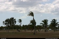Photo by elki |  Everglades beach, palms trees