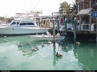 Photo by elki | Key West  marina key west