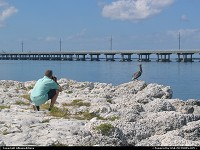 Florida, Pelican-watching in the Florida Keys. For webgallery: www.caribbean-editions.nl