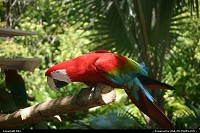 A parrot, Animal Kingdom (Disney)