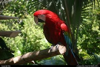 Amazing parrot, Animal Kingdom (Disney)