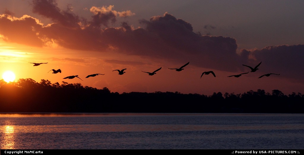Picture by MnMCarta:JacksonvilleFloridasunrise,geese,nature,light,sillouette,birds,geese,canadian,river,