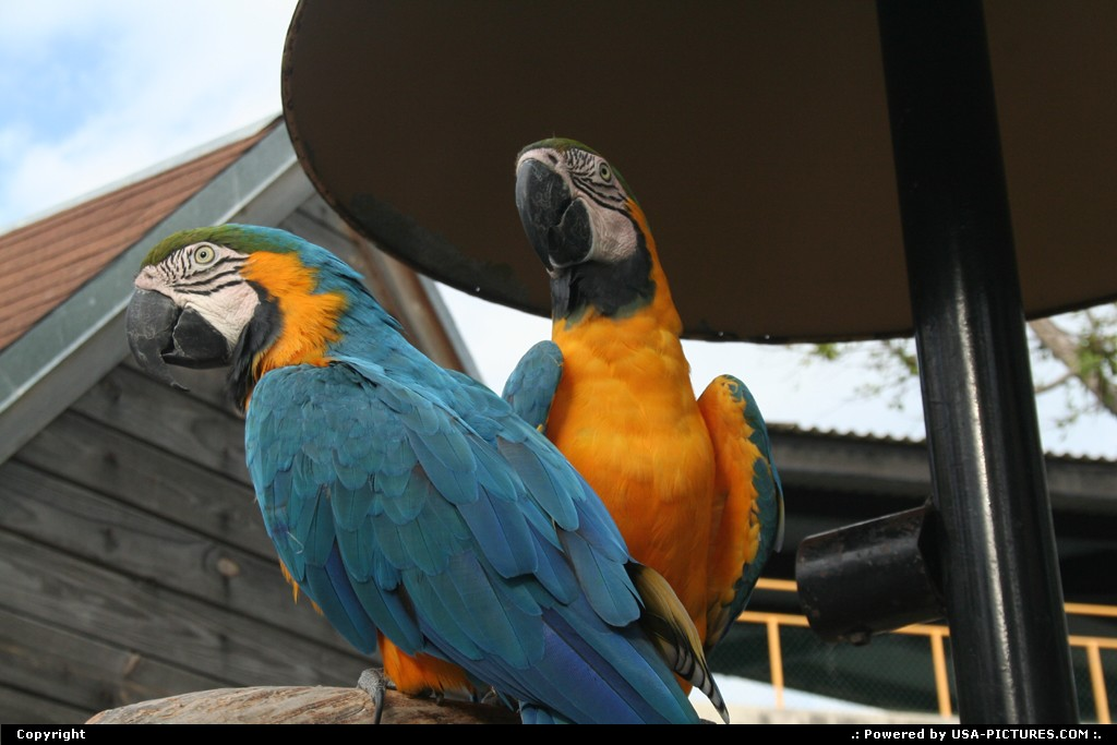 Picture by elki:MiamiFloridaMiami seaquarium parrot