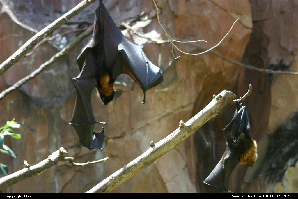 Picture by elki: Orlando Florida   bat