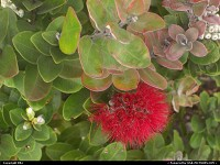 Photo by elki |  Hawaii Volcanoes flower