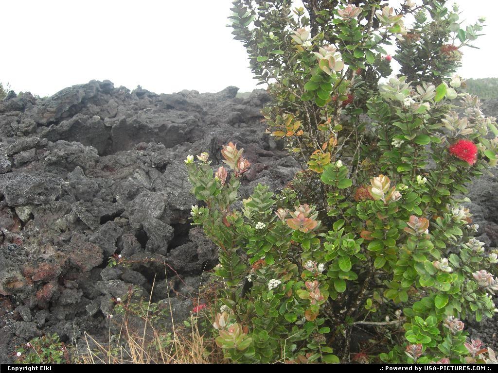 Picture by elki:HawaiiHawaii Volcanoeslava, flower