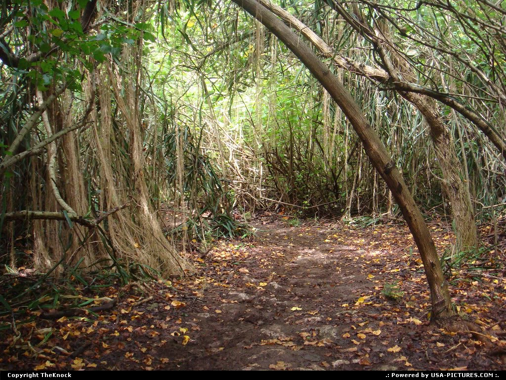 Picture by TheKnock:Hawaii National ParkHawaii