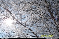 Sun shining in clear blue sky through frosty tree branches
