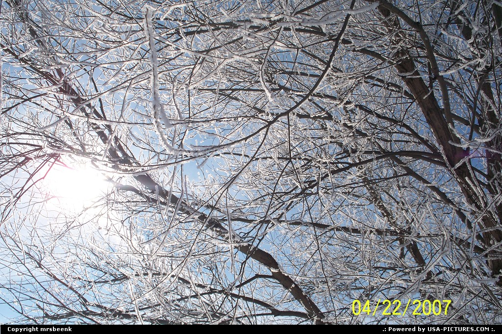 Picture by mrsbeenk: Not in a City Iowa   Sun, Sky, Frost, Tree
