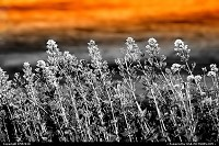 Photo by DMP2010 | Lewiston  Idaho,flower,landscape