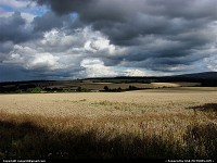 Idaho, dark clouds over wheat fields in Idaho