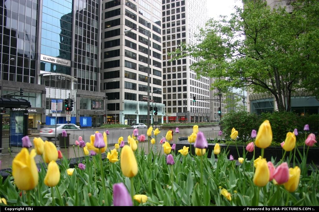 Picture by elki:ChicagoIllinoisflowers