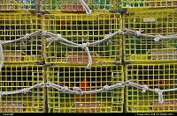 Photo by elki | Boston  Lobster traps, rockport