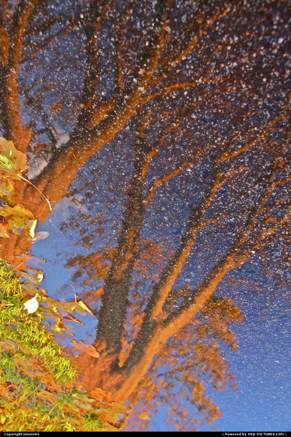 Picture by lstone84:GloucesterMassachusettstree, reflection
