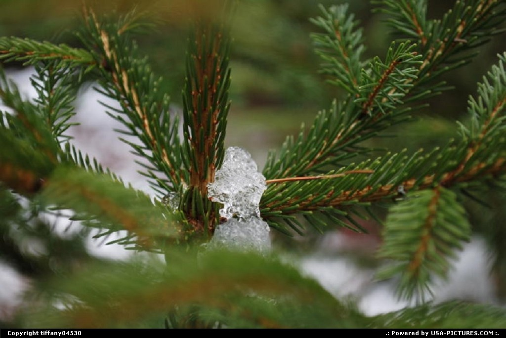 Picture by tiffany04530:West ForksMainesnow, tree, ice, cold