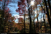 Not in a city : Fall colors, New Hampsire