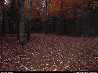 Photo by usaspirit | Not in a city  Fall season, forest in new hampsire