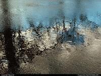 New-Jersey, Water Puddle on Black top