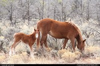 New-mexico, if you drive on the road 264 you will maybe have the chance to see these sympathic horses on the side of the road...