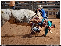 New-mexico, Rodeo