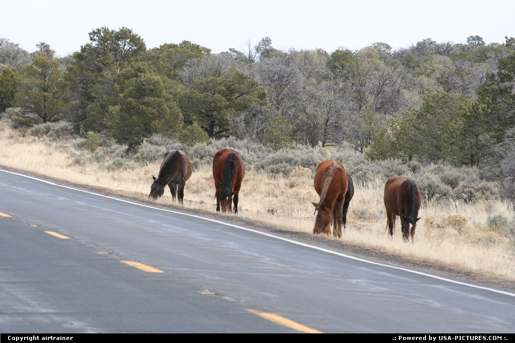 Picture by airtrainer: Hors de la ville New-mexico   horses