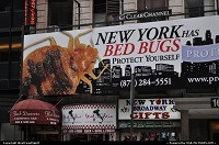Photo by WestCoastSpirit | New York  bug, bugs, hotel, beds