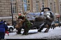 New-york, The famous charging bull in New York, close to Wall Street, Ground Zero, and battery park. Actually located in just north of Bowling Green Park. Dressed with his christmas crown