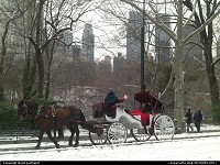 New York : A horse carriage/caleche ride in Central Park, with New York skyline in the background