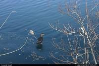 cannard sur la glace du réservoir d'eau de central park