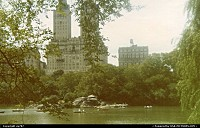 New York : Nature and urban landscapes on an ever going encounter.