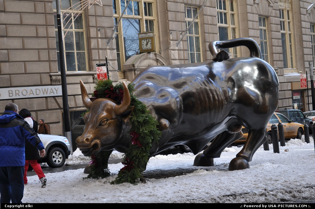 Picture by elki:New YorkNew-yorknew york bull