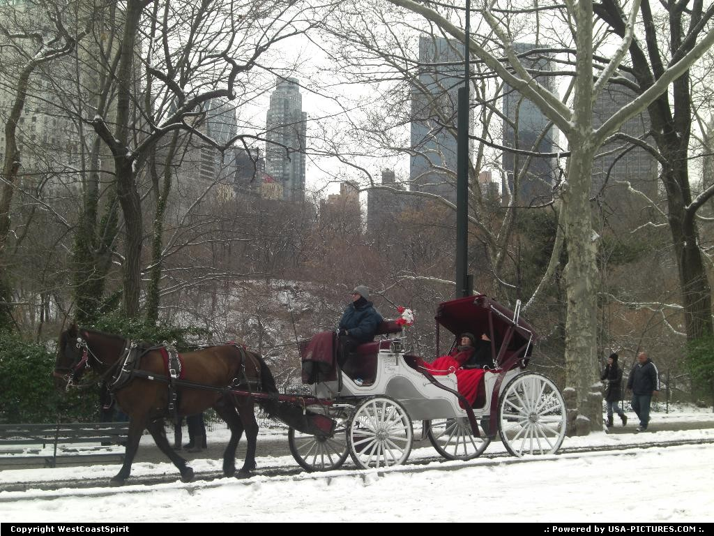 Picture by WestCoastSpirit: New York New-york   horse, horses, park